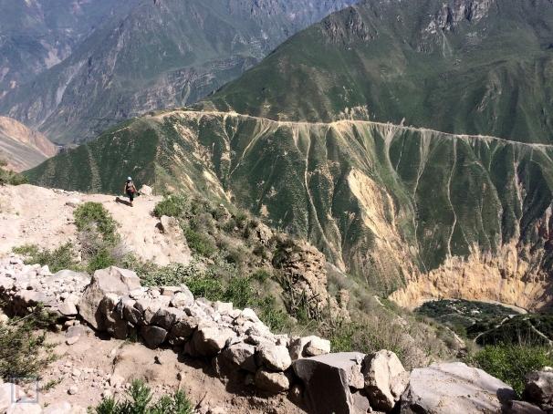 Uitzicht op de oase in de Colca Canyon