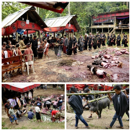 Begrafenisceremonie in Toraja, Sulawesi